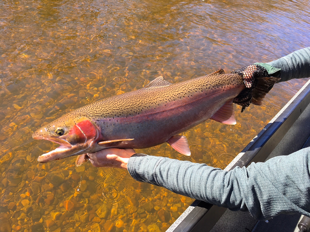 fly fishing for spring steelhead